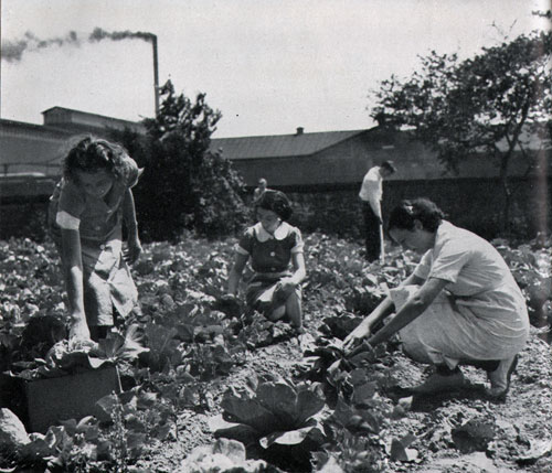 Photo 17: Young Women Working At NYA Gardening Project