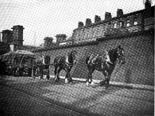 Three-Horse Tandem Hitch Hauling a Loaded Freight Car Around the Liverpool Docks.