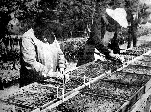 WPA Plant Propagation Projects